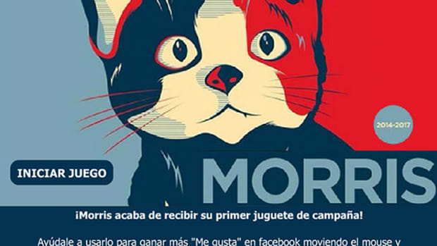 morris-cat