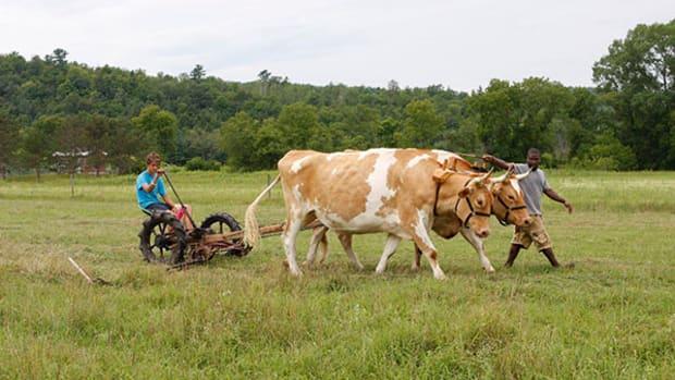 gmc-oxen