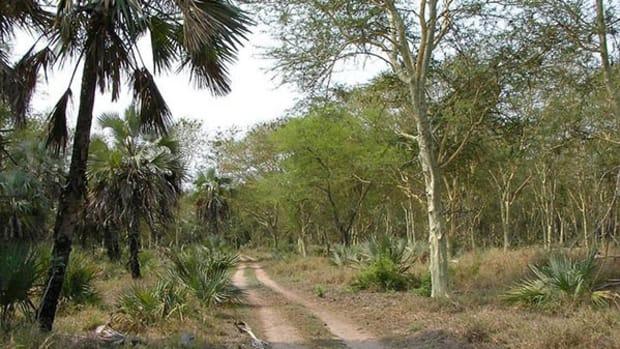 gorongosa-vegetation
