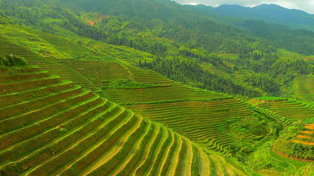 china-rice-terrace