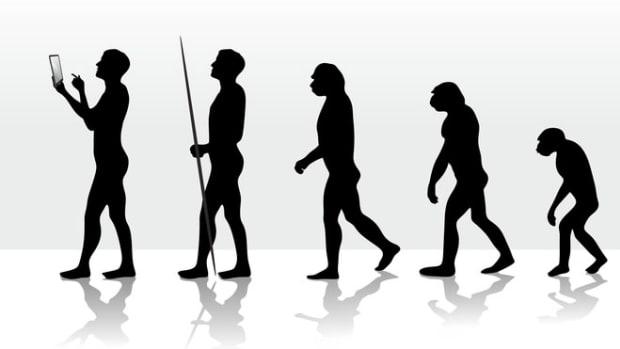 evolution-image