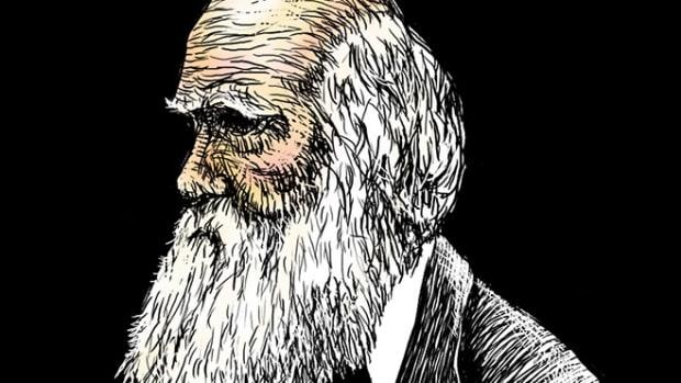 darwin-illo