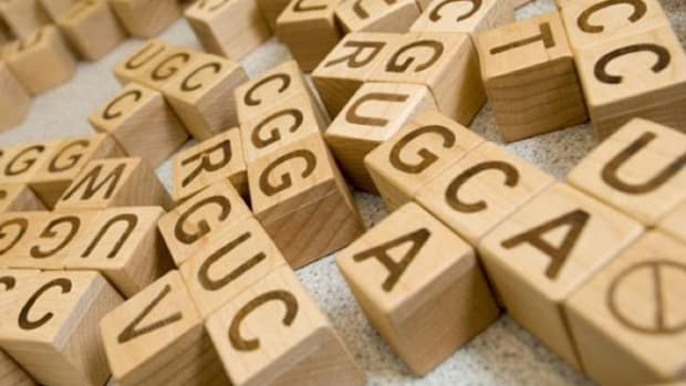 dna-wooden-blocks