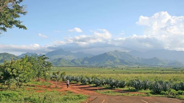 crops1.jpg