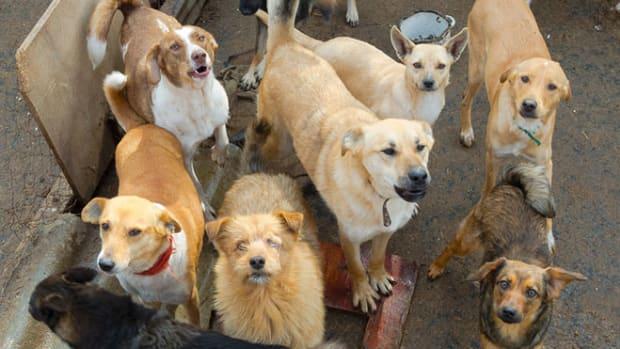 dogs-hoarding