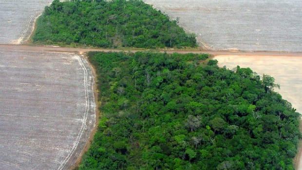 brazildeforest.jpg