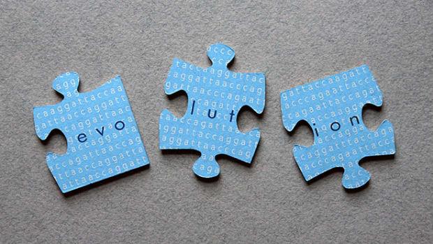 evolution-puzzle