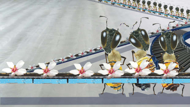 bee-assembly-line.jpg