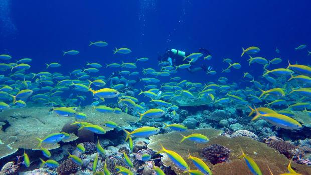 Coral_Image-5.jpg