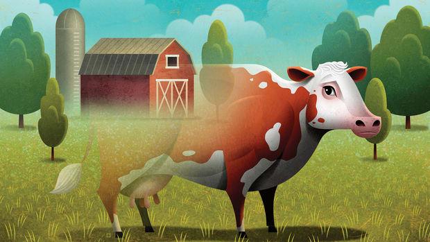 cow-prospector.gif