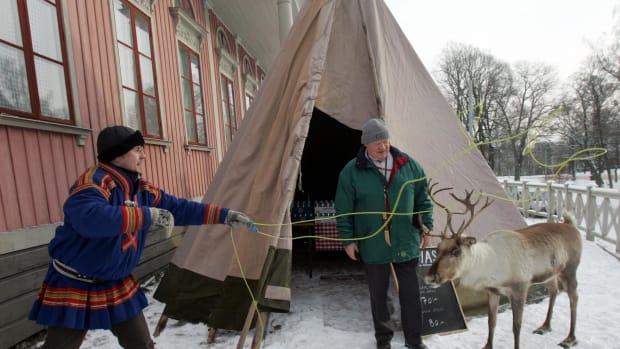 sami reindeer in the village