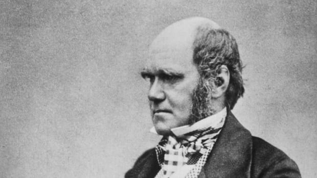 Charles_Darwin_seated_crop.jpg