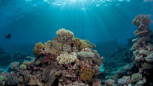 1-catlin_seaview_survey._coralsea12_jaynejenkins_1.jpg