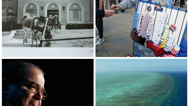 Weekly collage.jpg