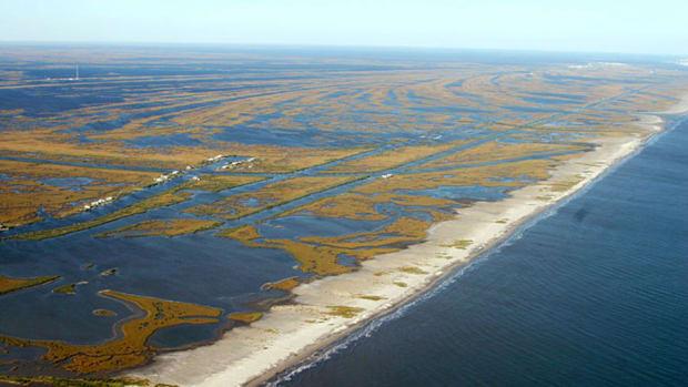 1-wetlandlg.jpg