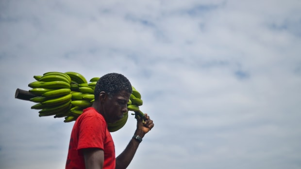 A man carries bananas in Colombia's Chocó region.