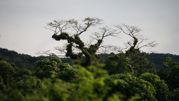 A view of the Atlantic rainforest near Salto Morato Nature Reserve, in Guaraquecaba, in the southern state of Parana, Brazil.