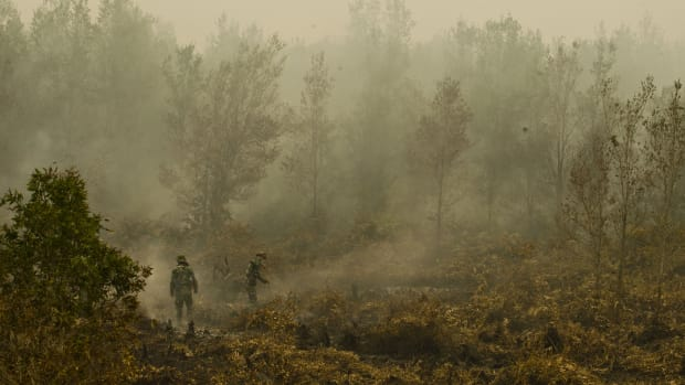 In this photograph taken on September 24th, 2015, Indonesian military troops extinguish a fire at a vast burning peat land forest in the Jabiren Raya district of Central Kalimantan province on Borneo island during President Joko Widodo's inspection of firefighting operations to control agricultural and forest fires.