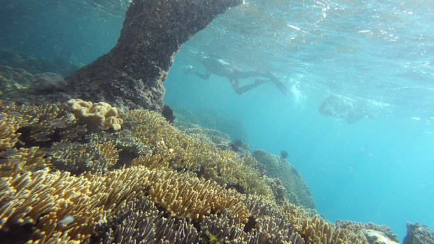 Divers explore the coral reef in the waters of Raja Ampat's Kri Island located in eastern Indonesia's Papua region.