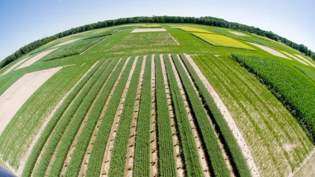 Biofuels.