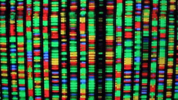A digital representation of the human genome.
