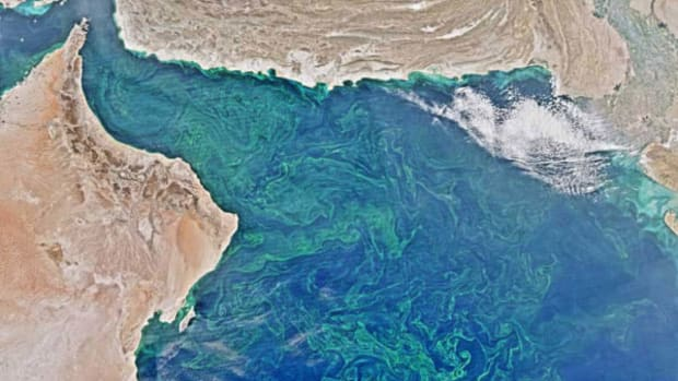 A phytoplankton bloom in the Arabian Sea and Gulf of Oman (upper right).