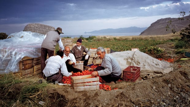 Lake Urmia, Iran: Men harvest tomatoes in the countryside near Lake Urmia, a large salt lake that is rapidly drying out. Scientists believe resulting salt storms will ravage the region's agriculture.
