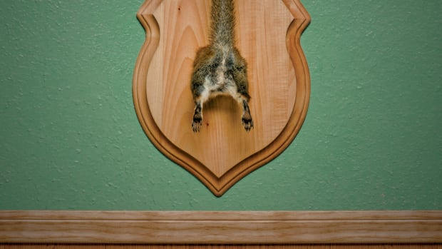 one-last-thing-taxidermy-04