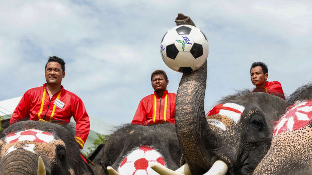 Elephants participate in a football game to kick off the World Cup fever as part of an anti-gambling campaign at the ancient Thai city of Ayutthaya on June 13th, 2018. Painted with flags of countries competing in the World Cup, the nine elephants played a game against students from a local school ahead of the start of the 2018 Football World Cup in Russia.