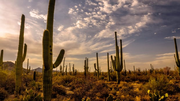 The Sonoran Desert in Arizona.
