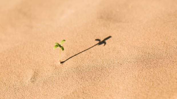 Sand Vince Beiser