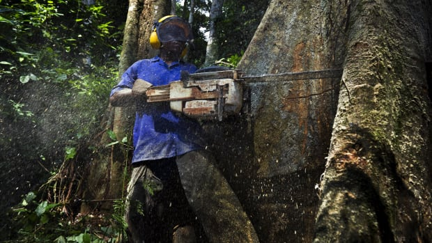 Sustainable logging in Cameroon.