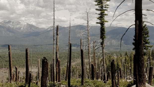 Charred trees stand where the 2007 Angora Fire scorched 3,100 acres and destroyed 254 homes near South Lake Tahoe, California.