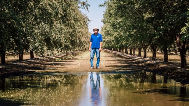 Tom Frantz on his almond grove in Shafter, California.