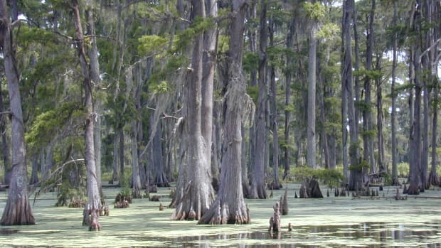 A swamp in southern Louisiana.
