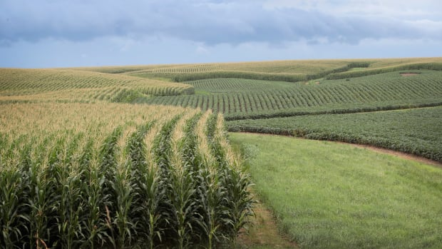 Corn and soybeans grow on a farm near Tipton, Iowa.