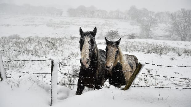 Two wild horses stand together on Black Mountain as heavy snow falls on January 16th, 2018, in Belfast, Northern Ireland. The Met Office has placed an amber weather warning alert on the province with school closures and some roads impassable. More snow is expected over the next 24 hours.