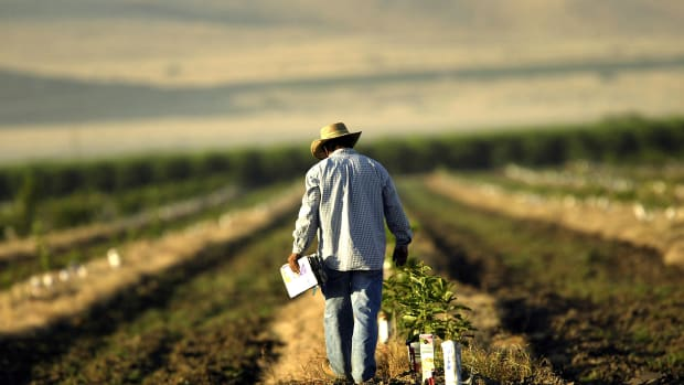 A farmworker labors in a field on August 11th, 2004, near the town of Arvin, California.