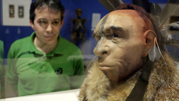 A visitor looks at El Neandertal Emplumado, a scientific recreation of the face of a Neanderthal who lived some 50,000 years ago by Italian scientist Fabio Fogliazza, at the Museum of Human Evolution in Burgos, Spain, on June 10th, 2014.