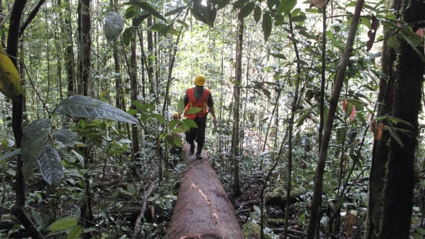 Logging worker in Indonesia.