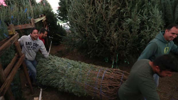 Workers help prepare a Christmas tree for sale at a Holiday Sale Christmas Tree lot on November 29th, 2018, in Miami, Florida. Reports indicate that the United States is suffering from a Christmas tree shortage nationwide, which is causing prices of trees to go up. The Miami Herald reported that the economic crash of 2008 led to fewer trees being planted, which is affecting this year's harvest because the trees take about 10 years to mature. Wildfires and hurricanes have also contributed to the shortage.