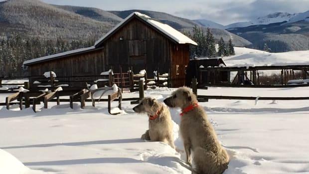 Pam Houston Irish wolfhounds Colorado
