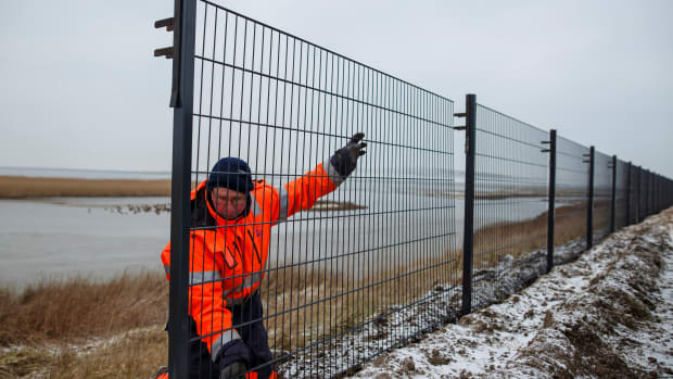 A worker installs a portion of a fence along the Danish border with Germany that is meant to stop wild boar from entering Denmark, on January 31st, 2019, near Tonder, Denmark. Danish authorities are hoping the new 70-kilometer fence will prevent a possible spread of African swine fever from Eastern European wild boar to domestic pigs. Denmark has a large pork industry, and authorities fear a possibly devastating impact should African swine fever reach Danish farms.