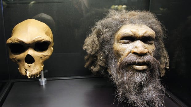 Picture taken at the Musee de l'Homme in Paris shows a reconstruction of a head of a Homo Rhodesiensis, a possible hominin species described from the fossil Rhodesian Man.