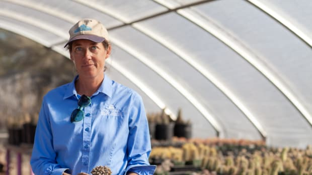 Jessie Byrd, manager for the Pima County Native Plant Nursery in Tucson, holds a Ariocarpus fissuratus, a rare plant that was confiscated from someone crossing the border.