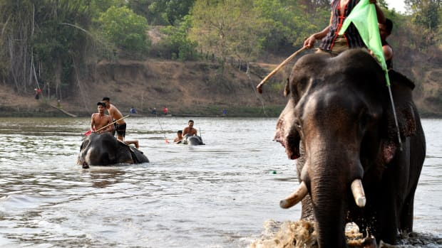 Mahouts ride their elephants in a river swimming race during the Buon Don elephant festival in Vietnam's Central Highlands in the Dak Lak province on March 12th, 2019. Locals say the race is a celebration of the much-revered animals, traditionally thought of as family members in this part of Vietnam, but conservation groups are calling for an end to the festival, which they say is cruel and outdated.