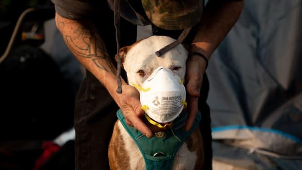 A dog wears a respirator.