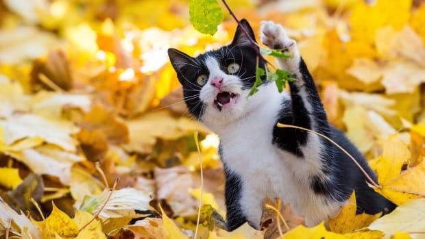 A cat attacks a leaf.