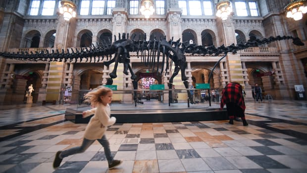 Members of the public view Dippy the dinosaur at Kelvingrove Art Gallery and Museum on January 22nd, 2019, in Glasgow, Scotland. Diplodocus carnegii, a Sauropod, was named after Andrew Carnegie, who funded the excavation in Wyoming in 1899. Dippy is one of several replicas donated by Carnegie to several countries around the world.