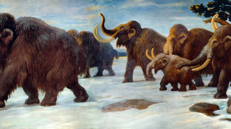The Tragedy of the Woolly Mammoth: Does An Economic Problem Explain Their Extinction?